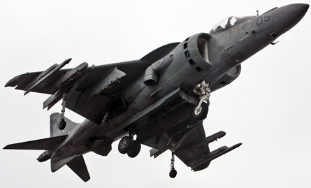 Harrier medium