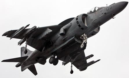 Harrier medium