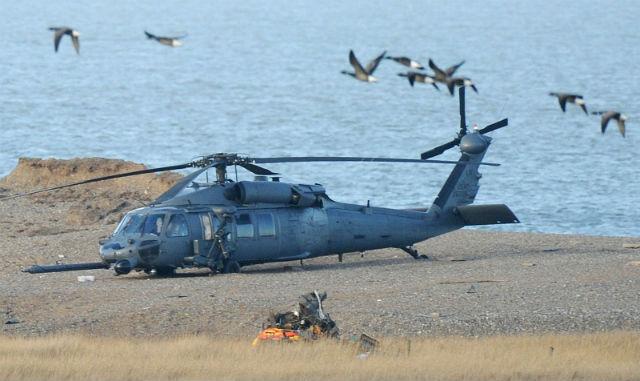 Pave Hawk birds - Rex Features